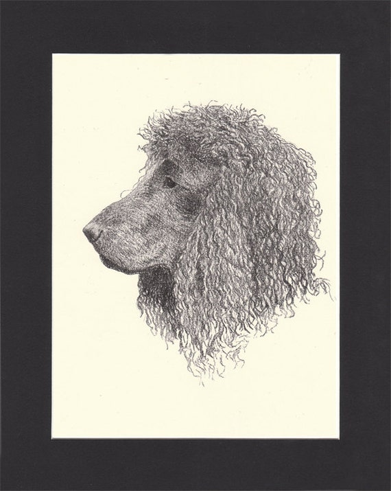 IRISH WATER SPANIEL TWO NAMED CHAMPION DOGS OLD ORIGINAL 1930/'S DOG PRINT