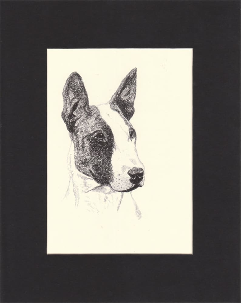 Bull Terrier Vintage Dog Print C.Francis Wardle 1935 Drawing image 0