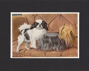 Japanese Spaniel and Yorkshire Terrier Print 1919 Vintage Dog Print by Louis Agassiz Fuertes Japanese Chin Picture Yorkie Picture