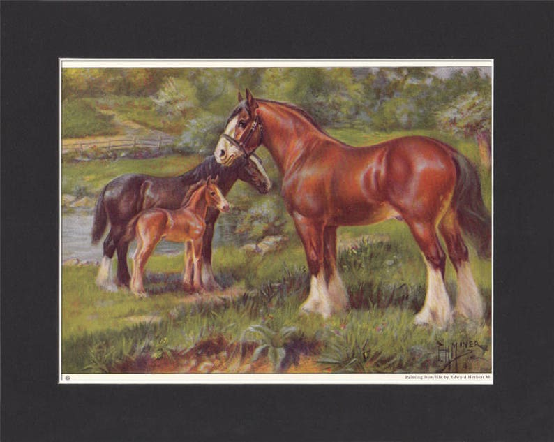 Clydesdale Horse Print 1923 By Edward Miner Print of Signed image 0