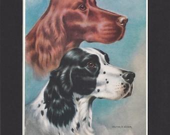 Irish Setter & English Setter Print - Walter A Weber 1947 - Mounted with Black Mat - Vintage Dog Print - Irish Setter English Setter Dogs
