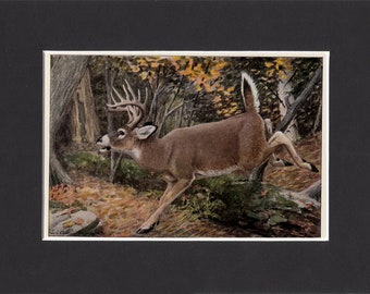 Virginia White Tailed Deer Print 1916 by Louis Agassiz Fuertes Vintage Bookplate Picture with Mat Whitetail Deer Hunting Print