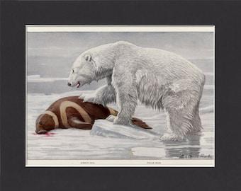1916 Polar Bear Print by Louis Agassiz Fuertes Original Vintage Bookplate Mounted Print Polar Bear Picture Ribbon Seal Arctic Bear Print