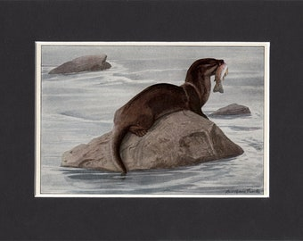 Otter Print 1916 by Louis Agassiz Fuertes Vintage Bookplate Picture with Mat Otter Picture Otter Painting Otter Artwork
