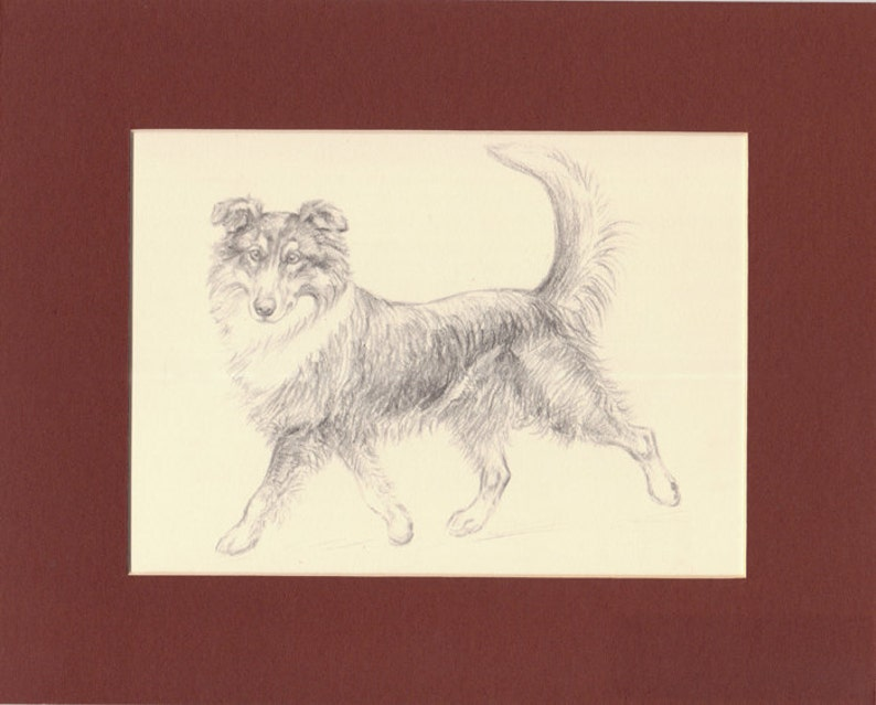 Collie Vintage Dog Print K. F. Barker 1933 Drawing Print image 0