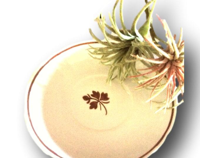 Vintage China Saucer | Tea Leaf Saucer | Alfred Meakin China Saucer | Copper Tea Leaf | Royal Ironstone Saucer | Antique Saucer