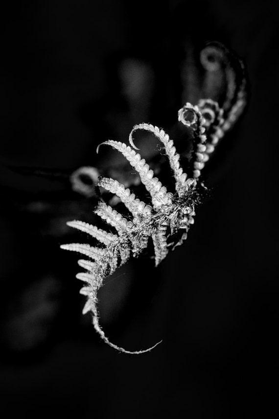 Bianco e nero fotografia stampa felce drammatico Woodland Art felci foresta Forest elegante stampa