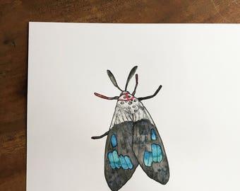 A4 Square Blue Moth Original Watercolour Illustration - Free UK shipping!