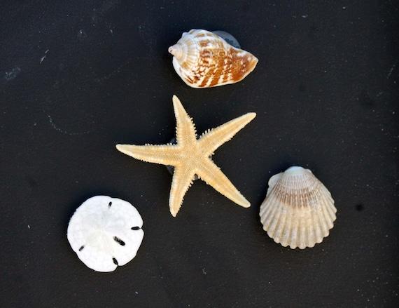 Shell Starfish Amp Sand Dollar Beach Decor Magnets Etsy