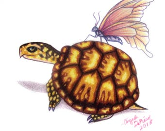 Box Turtle Drawing - Pink Butterfly