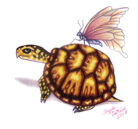 box turtle drawing pink butterfly etsy