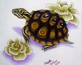 Turtle Drawing - Ringed Map Turtle