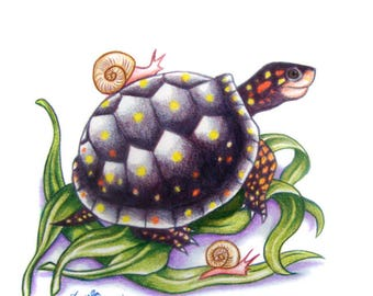 Turtle Drawing - Spotted Turtle With Snails
