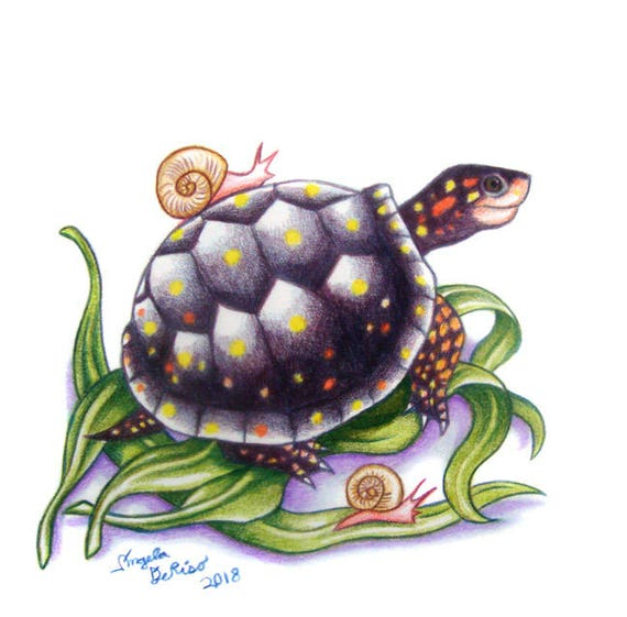 turtle drawing spotted turtle with snails etsy