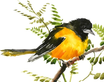 Baltimore Oriole, small original watercolor painting, yellow black bird art, small watercolor painting