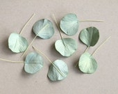50 Paper Eucalyptus Leaves - Sage Green - Round Leaves with Wire Stems - Made of Mulberry Paper