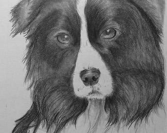 8x10 Pet Portrait - Custom Hand Drawn Pencil Drawing