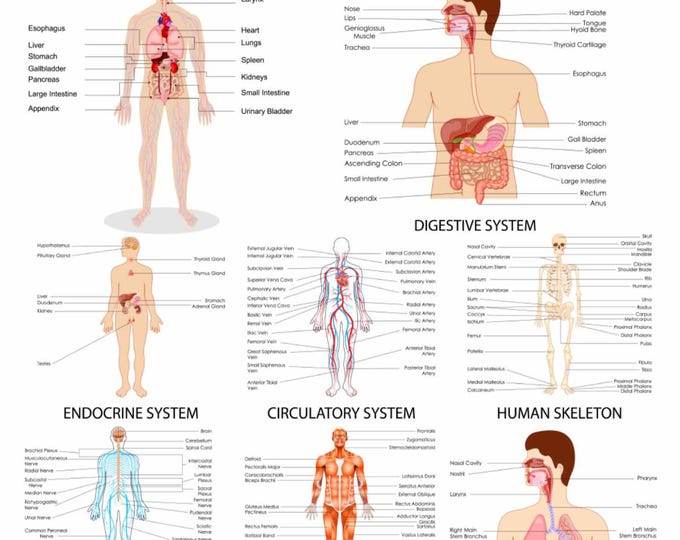 Human Body Systems Print,Human Body Systems Poster,Body Systems Wall Art,Educational Medical Print,Body Systems Medical Print,