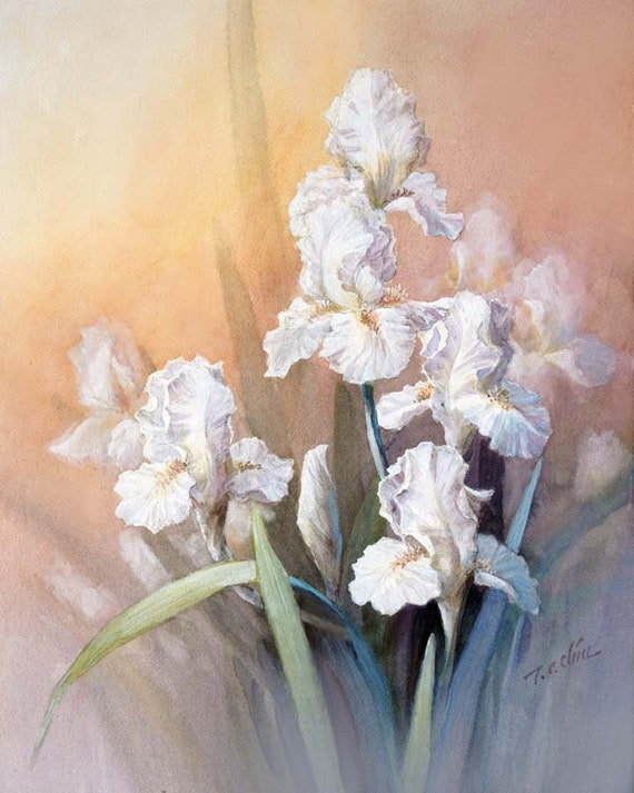 White Iris Flowers Art Print Of Original Water Color Etsy