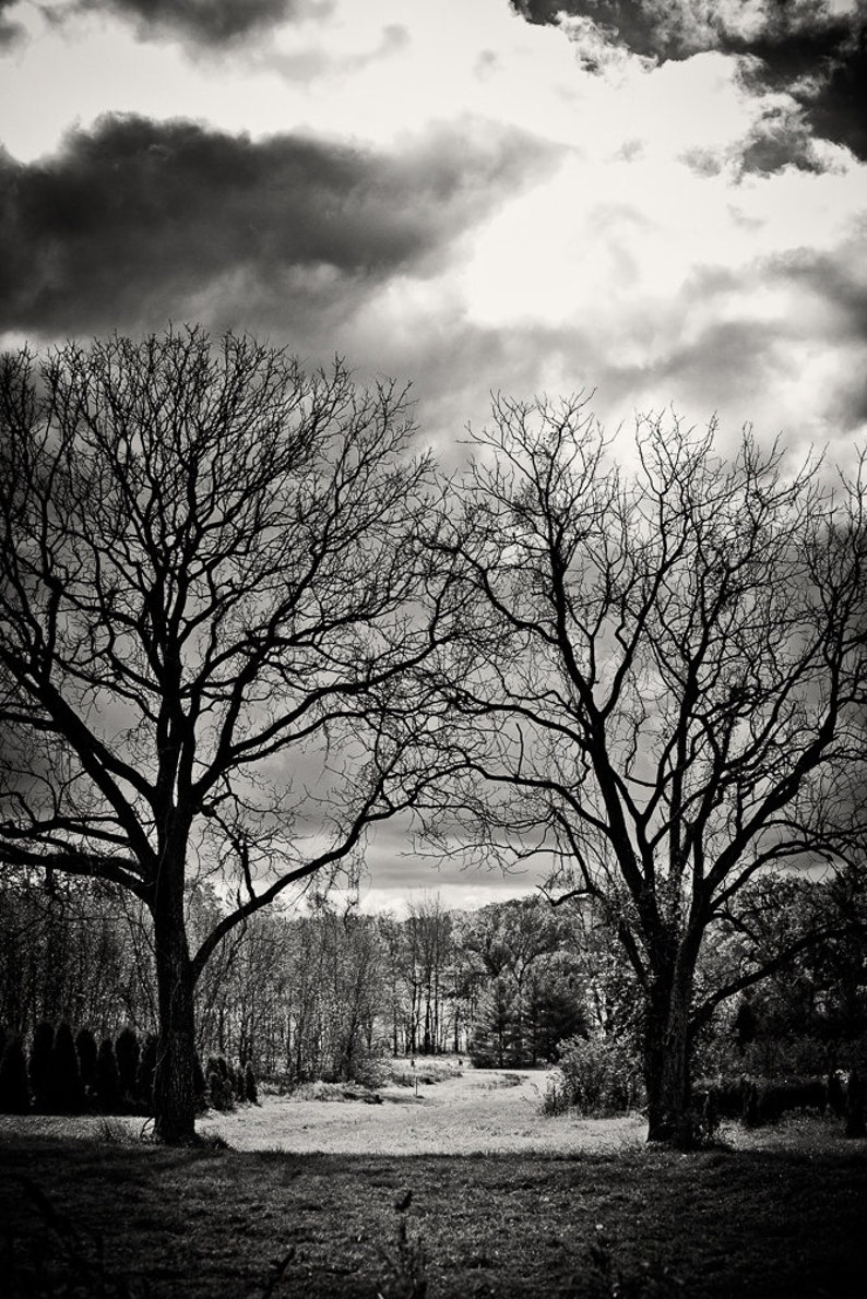 Landscape Photography  Tree Path  None Such Farms Bucks image 0