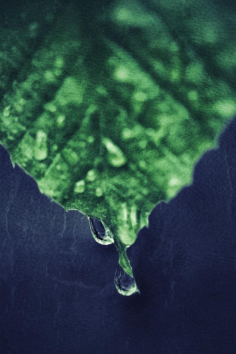 Green Leaf Macro  Photography   8x12 image 0