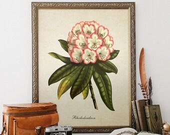 Botanical Print, Rhododendron Print, Home Decor, Rhododendron Botanical,  Floral Botanical Print, Rhododendron Botanical Illustration FL064