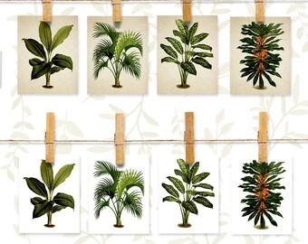 Botanical note cards stationery set, 8 cards, Botanical Plants note card set, Green plants stationary set, Green Ferns folded cards, nc003