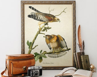 Antique Botanical Wall Art Bird Print Red Shouldered Hawk Giclee Vintage Natural History Art Colorful Decorative Audubon Reproduction B001