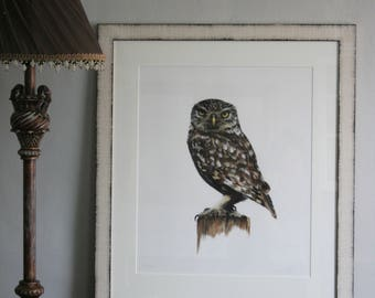 Archimedes - Limited edition giclee print of an owl from original pastel drawing by Imogen Man