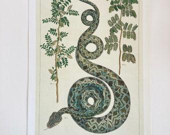 Framed Snake Art Etsy