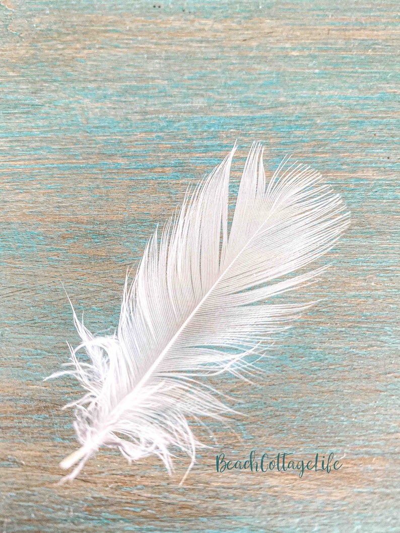 ANGEL FEATHER Wall Art Photographic Print or Canvas White image 0