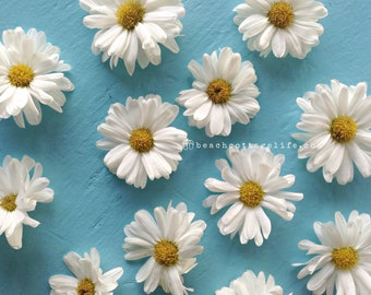 Spring Summer White Yellow Daisy Daisies Turquoise garden floral- wall art photography home decor