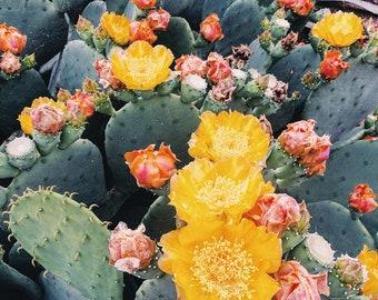 Cacti Blossom Art Print - Digital Download