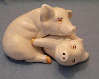 Salt and pepper pigs having sex