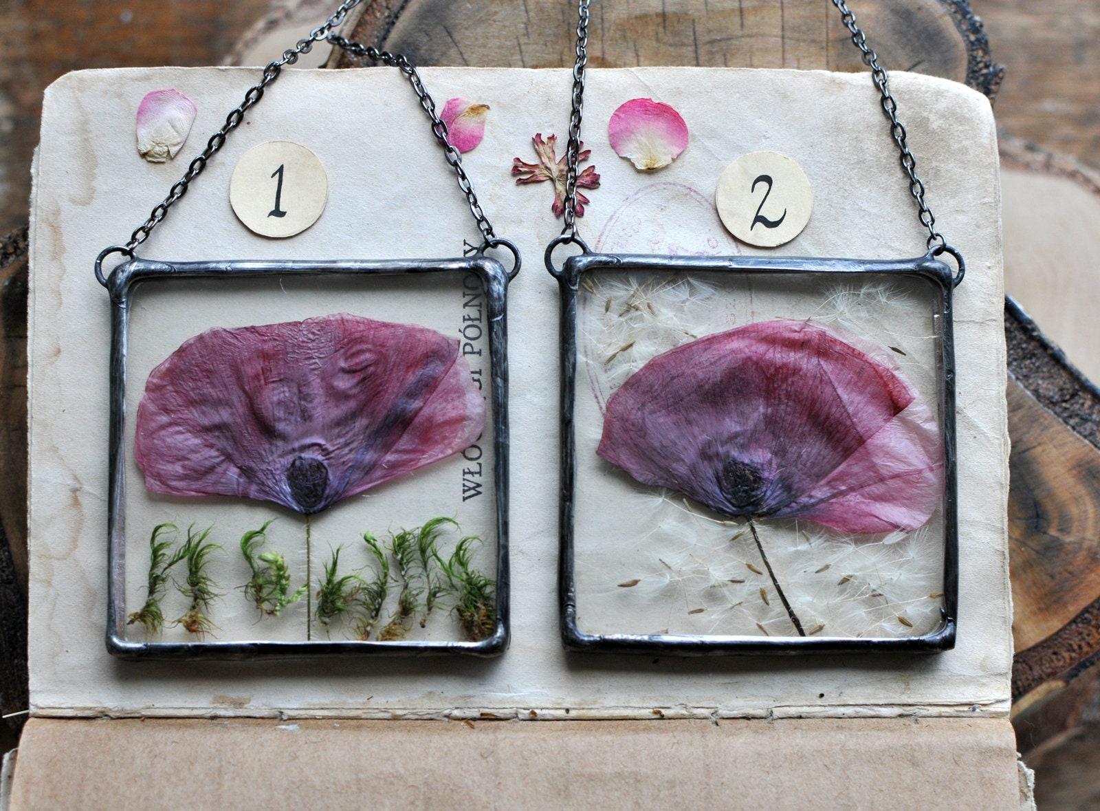 Rahmen mit Mohn gepresste Blumen Tillandsia Terrarium | Etsy