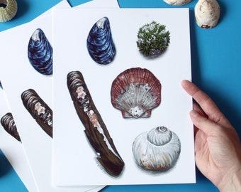 Sea Shells of Nova Scotia - digital reproduction of a watercolour & acrylic painting - coastal, nautical, ocean artwork, art for your home