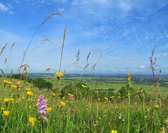 Wiltshire meadow landscape photo, orchids, fine art print, sunny day, England, wall art, gift, charity donation