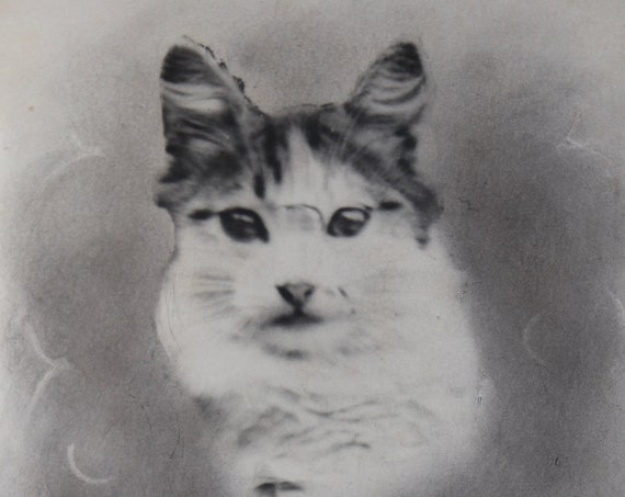 French, Photo Postcard of Cat by Guilleminot, Bœspflug and Cie of Paris