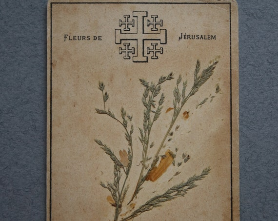 Dried Flowers from the Church of the Holy Sepulchre in Jerusalem
