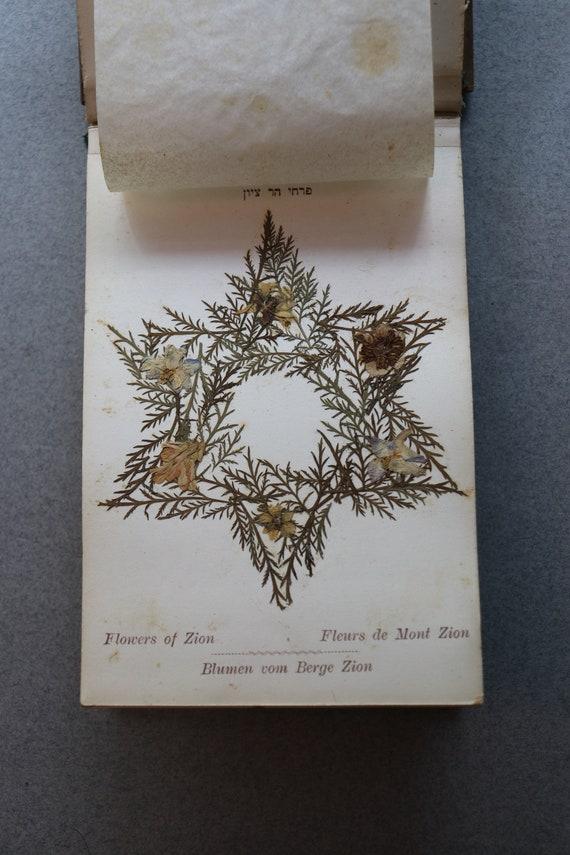 Flowers from the Holy Land/Fleurs De La Terre Sainte Herbarium
