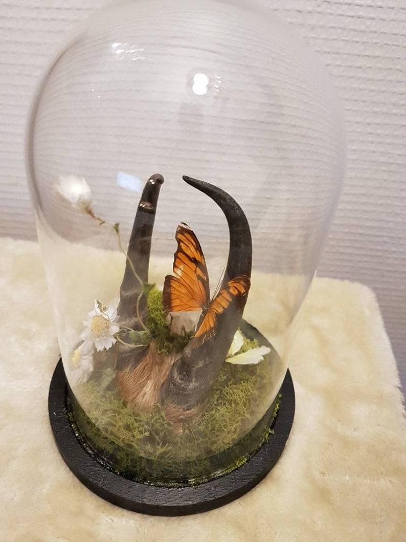 Cloche taxidermie avec papillon