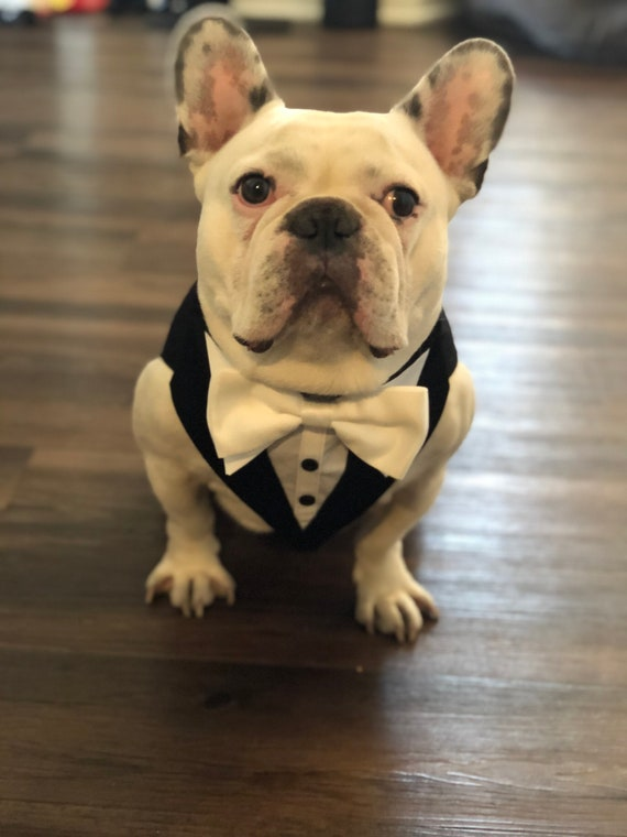 Custom Made Custom Fit Bow Tie Color to Match Your Wedding Party Medium Grey Formal Wedding Formal Tuxedo For Dogs Pet Wedding Attire