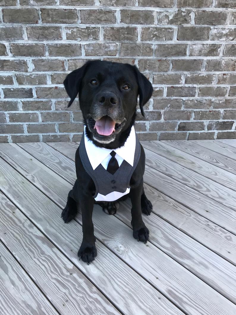 Large and EX Large  dog Harness Wedding tuxedo  Dog wedding image 1