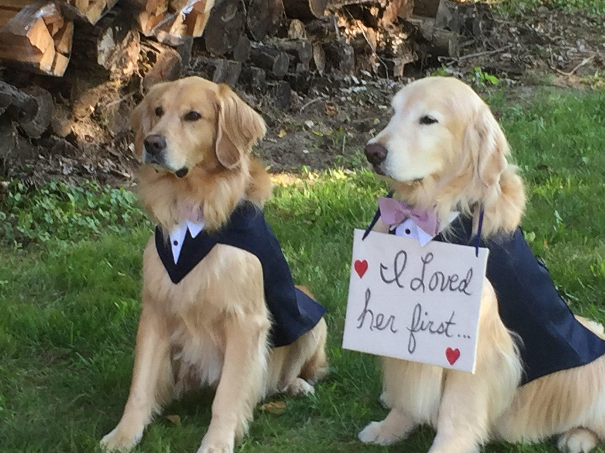 50: Wedding Ring Barrier Dogs At Websimilar.org