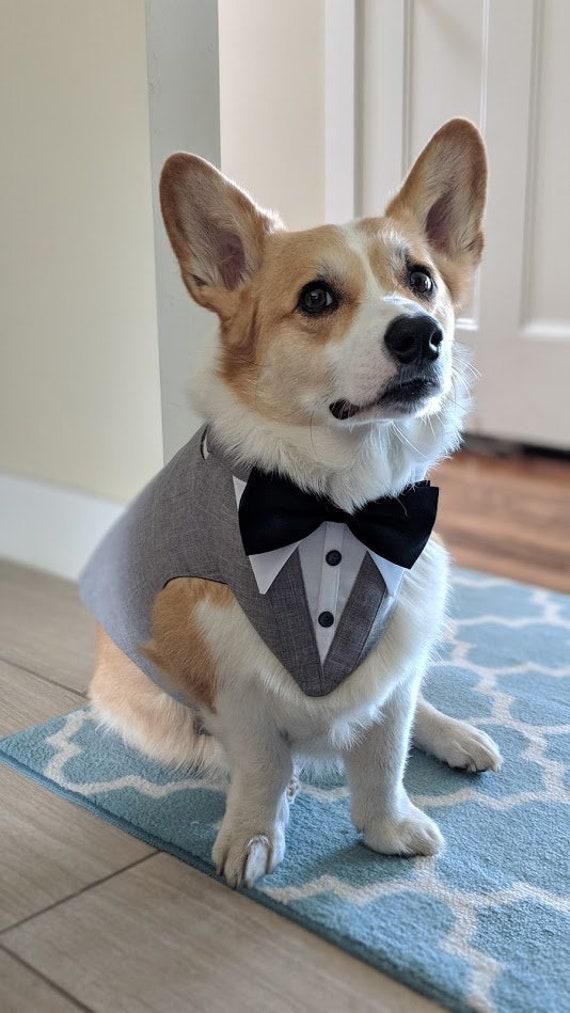 Grey Formal Dog Custom Fit Tuxedo . Wedding attire, dog suit , dog cloth ,  dog ring bearer . choice of color of bow tie .