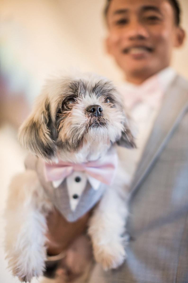 Image 0: Wedding Ring Barrier Dogs At Websimilar.org