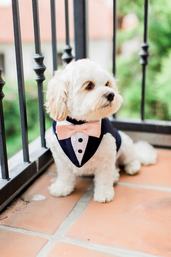 Pets + Wedding Portraits | Allan House