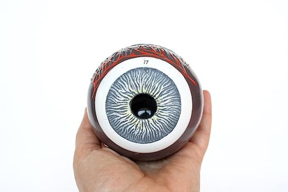 Eye Anatomy Model Eyeball Model Vintage Science Decor Eye Etsy