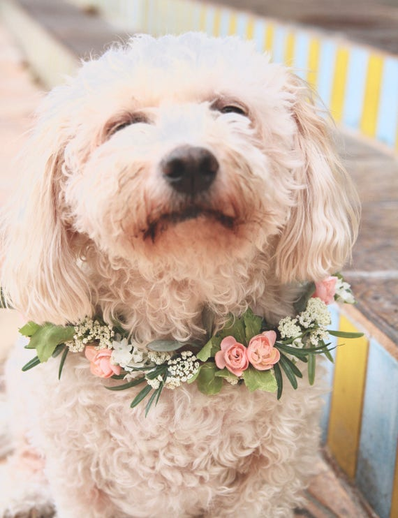 Dog Flower Collar | Dog Wedding Flower Collar | Dog flower wreath | Dog wedding collar | Wedding decor | Dog of Honor | Dog wedding Sign