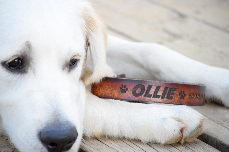 Laser Engraved Dog Collar Leather Dog Collar Personalized Leather Dog Collar Name Dog Collar Dog Collar Personalized Dog Collar